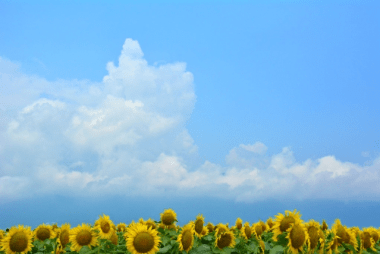 空とひまわり
