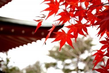 紅葉と神社