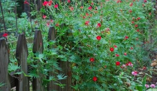 グリーンカーテンのおすすめ!簡単に花と実を楽しめる植物!