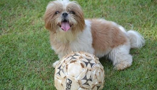 室内犬!飼いやすい犬ランキングTOP5!
