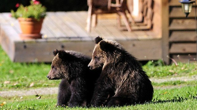 Bear Experts Predict Grizzly Activity In Missoula Neighborhood