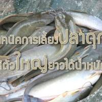 เทคนิคการเลี้ยงปลาดุกให้ตัวใหญ่ยาวได้น้ำหนัก