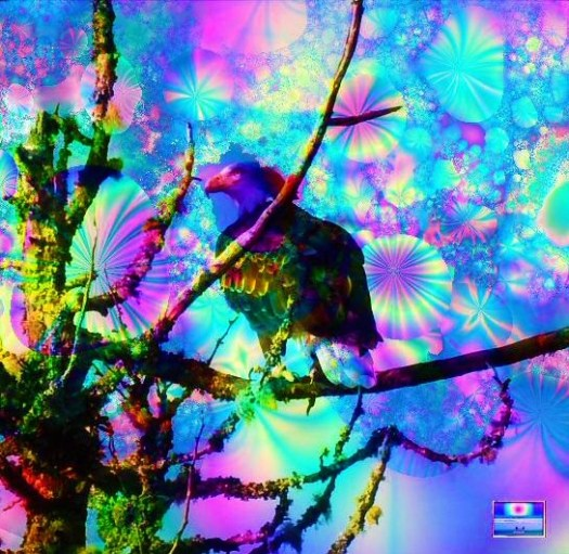 Eagle Psychedelic3