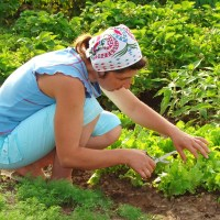 Four Seasons in One Day (3): Climate Change and the Constant Gardener