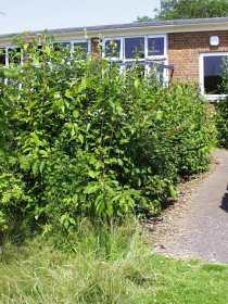 School- Native species Hedge
