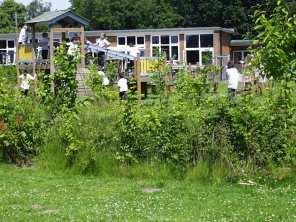School- hedge taking hold