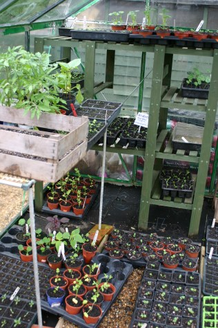 Greenhouse - full!