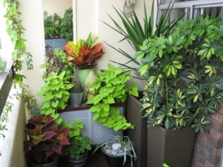 A smart balcony garden in Mumbai