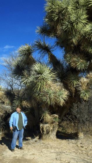 Joshua Tree at Grapevine Springs Ranch, Arizona