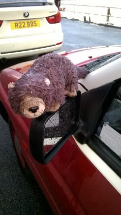 Otters alert! -a curious fundraising van for the Otter Trust was adorned with otters on the wing mirrors..