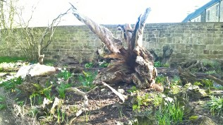 A stumpery within the walled garden..