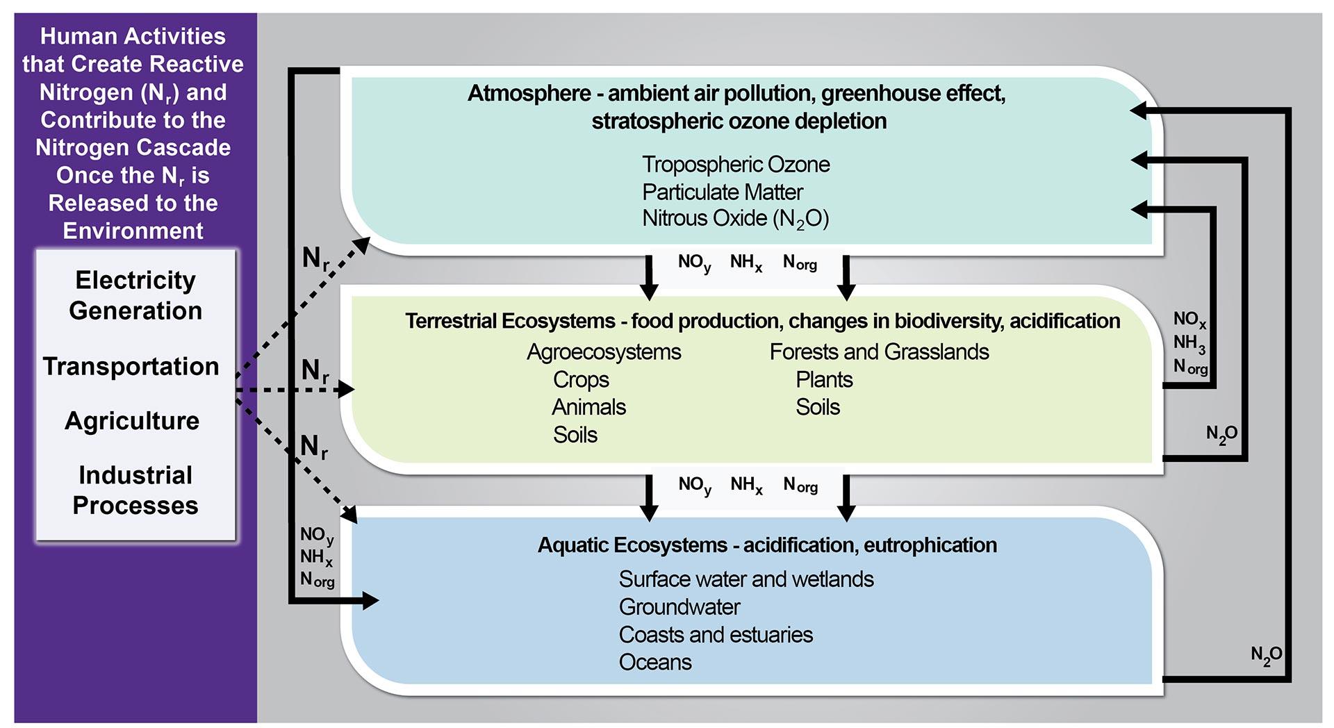 Phosphorus Cycle Worksheet Answers