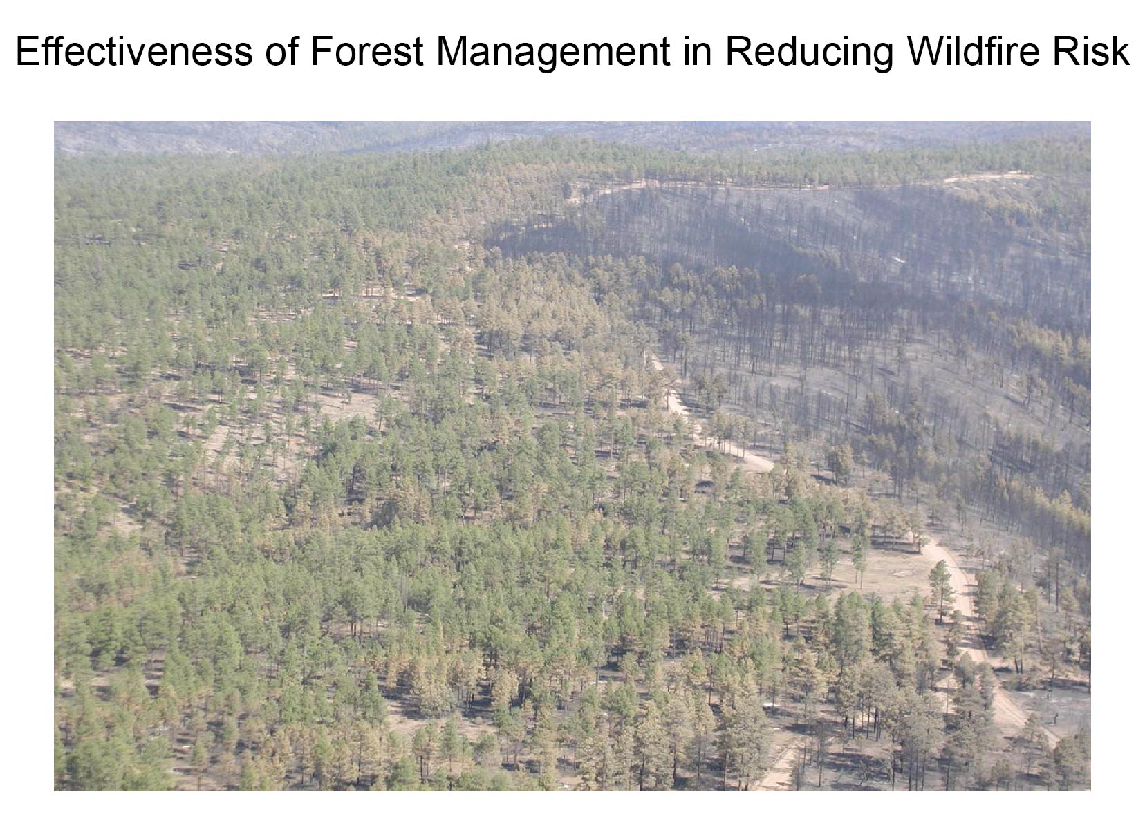 Effectiveness Of Forest Management In Reducing Wildfire