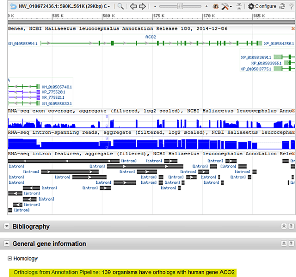 Figure 2. A portion of the NCBI Gene report for the bald eagle ACO2 gene. The graphical display includes information about the gene structure, the RefSeq transcript and protein models, and RNA-Seq coverage graphs produced by the annotation pipeline. The Homology section is highlighted, showing 139 organisms, including the bald eagle, with orthology to the human ACO2 gene.