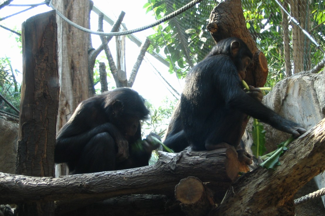 April and May annotations in RefSeq: cow, bonobo and more