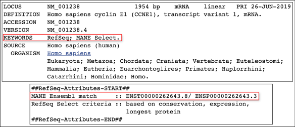 CCNE1_transcript