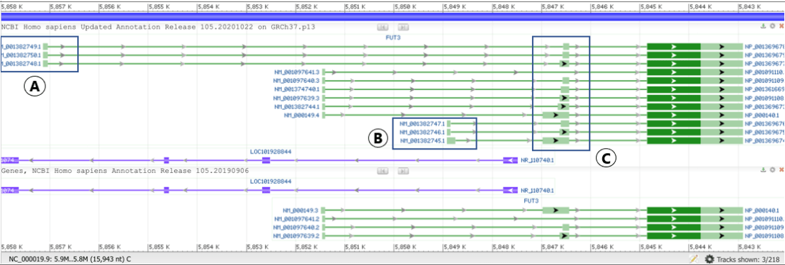 screenshot of new grch37 refseq annotation track in gdv