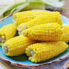 corn-29
