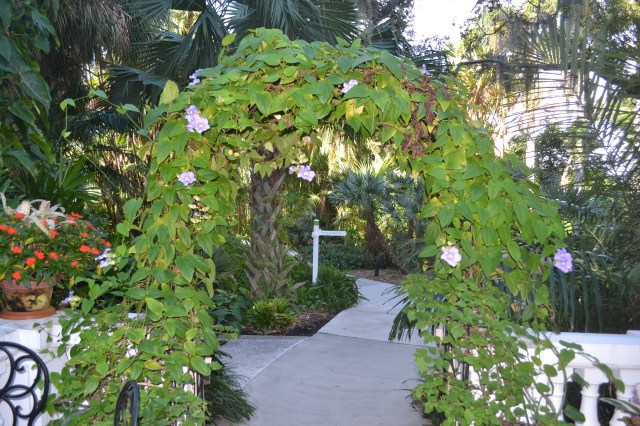 Sarasota steps towards the future with Selby Gardens growth plan ...