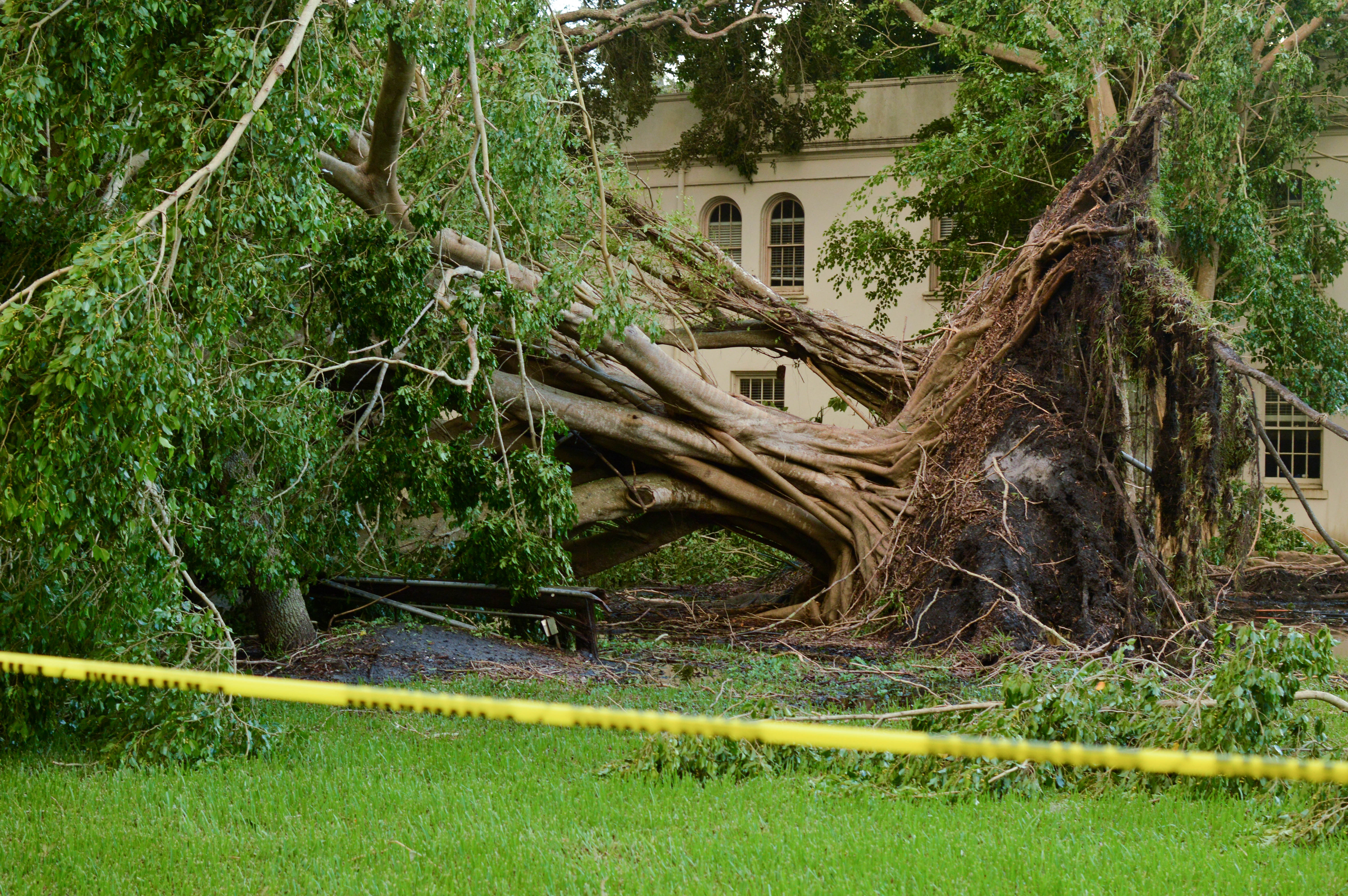 Missing in action: understanding tree removal on campus
