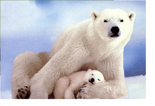 bear and cubs 2