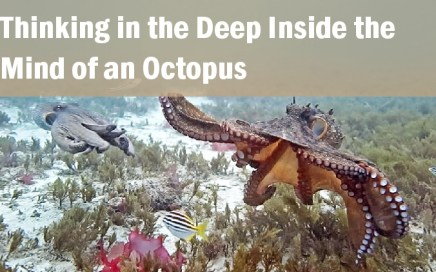 Thinking in the Deep - Inside the Mind of an Octopus