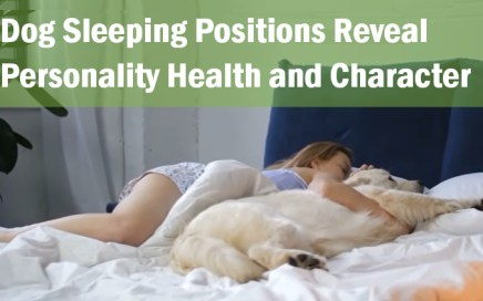 dog_sleeping_positions_reveal_personality_health_and_character_jaw dropping facts