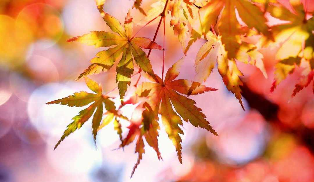 6 Quick Tips For Fall Marketing