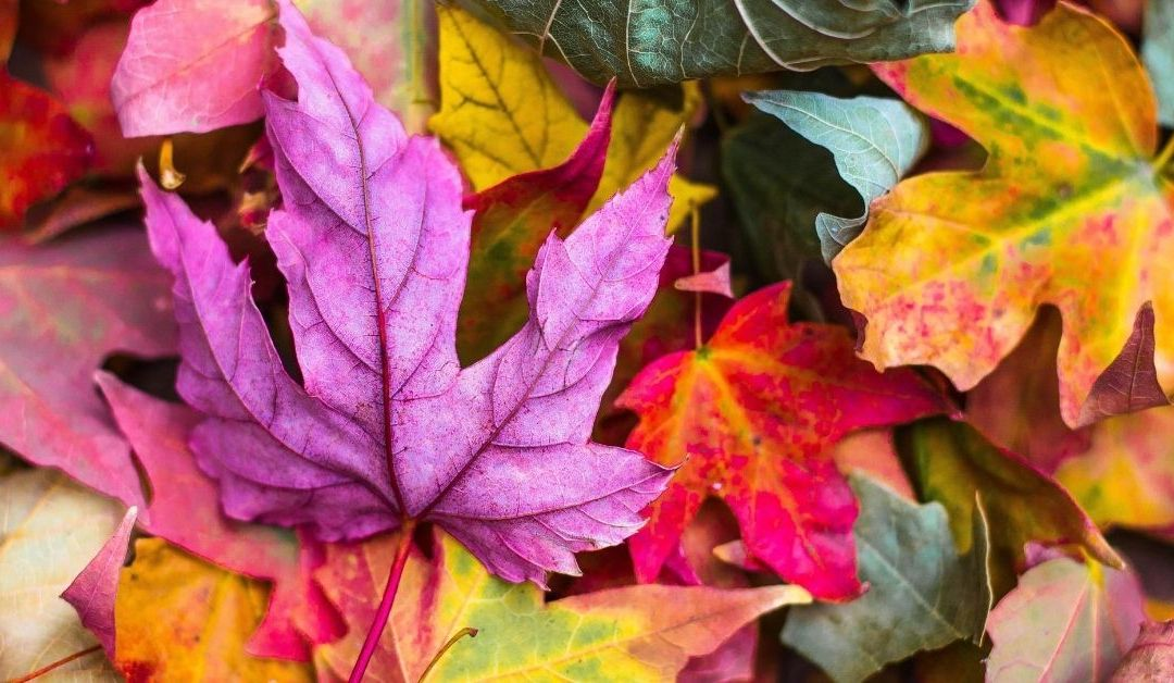 Fall Marketing Ideas For Restaurants During The New Normal