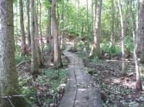trail 5