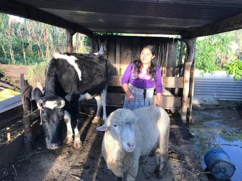 Regina and her cow