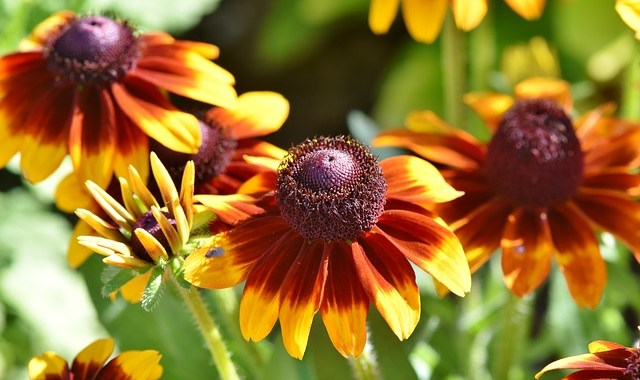 Tips For Knowing The Proper Garden Nutrients