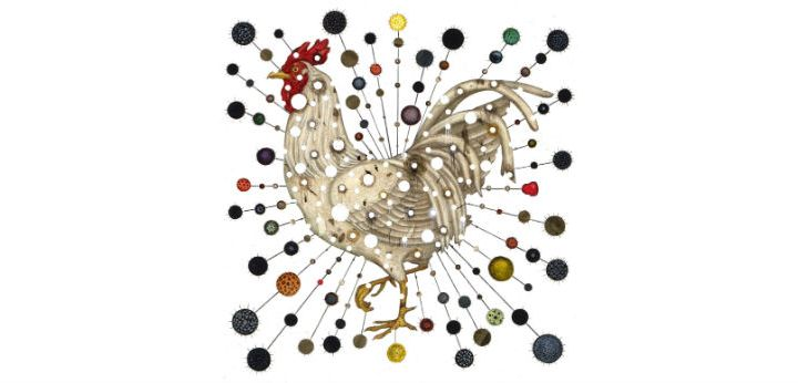 What You Get When You Mix Chickens, China, and Climate Change. Artwork Credit: Jason Holley/New York Times.