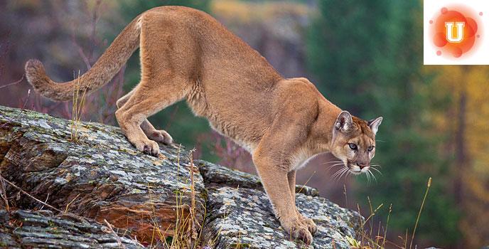 How Do We Best Survive with Apex Predators? #DoNowUPredators