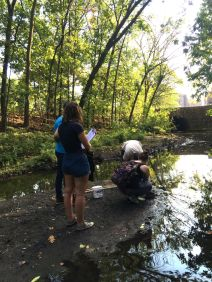 Fieldwork Photo Contest Submission - Lisa Lobel