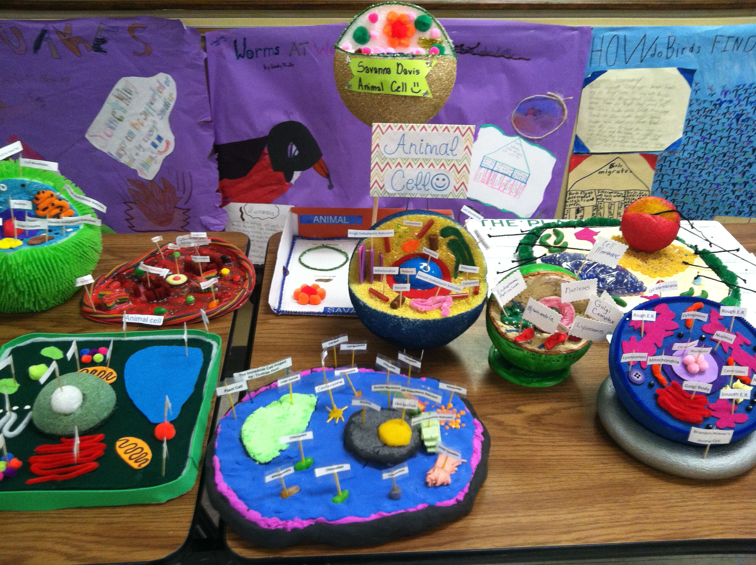 6th Grade Plant And Animal Cells