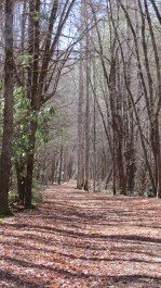 Walking up the Trail - Cataloochee Valley, NC