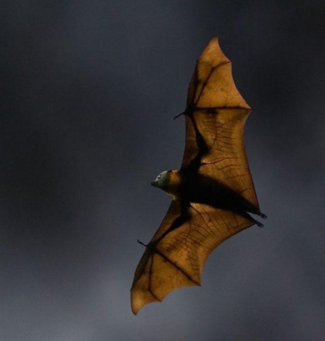 Medo e morte: a assustadora natureza da Austrália