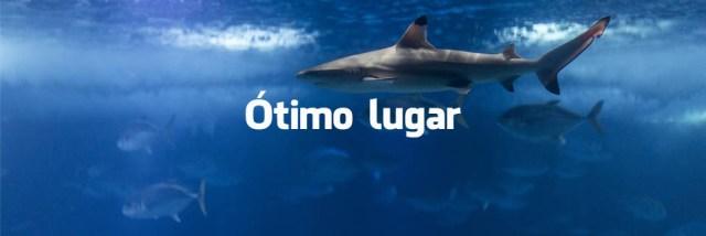 O que dizem os turistas sobre o Oceanário de Lisboa