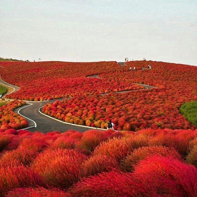 Parque Nacional Hitachi, Japão