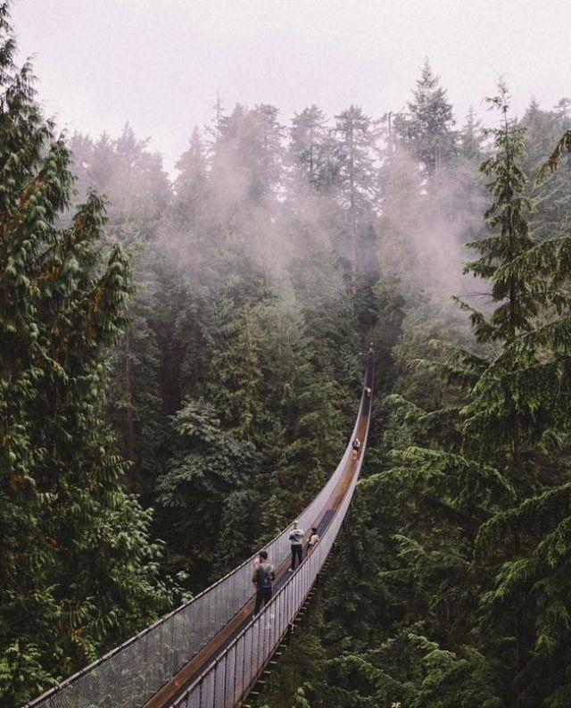 Ponte Suspensa de Capilano, Vancouver