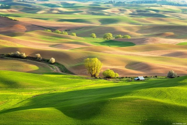 Palouse, Estados unidos - © LikeFotos