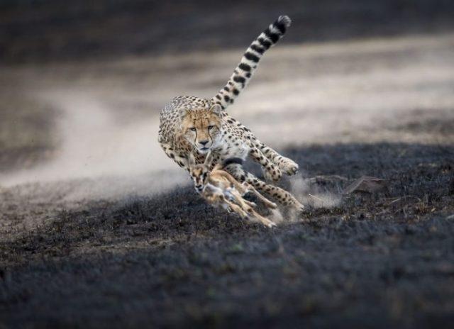 A National Geographic escolheu as melhores fotos 2018