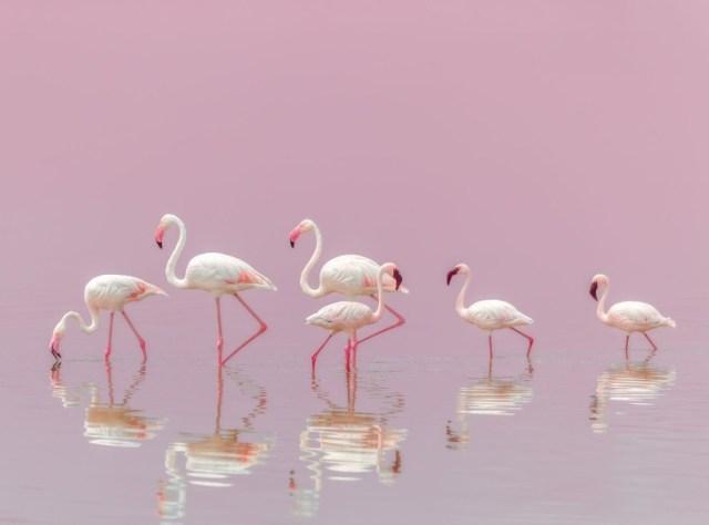 National Geographic melhores fotos 2018