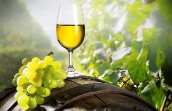 melhor vinho branco