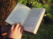 família de palavras