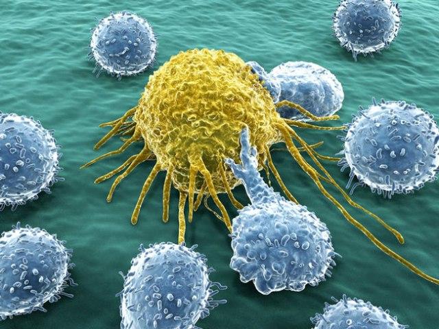 Fortaleça o seu sistema imunitário
