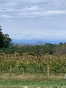 Vineyard and Blue Ridge at Marked Tree Vineyard - Flat Rock, NC