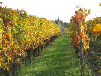 vigne-3