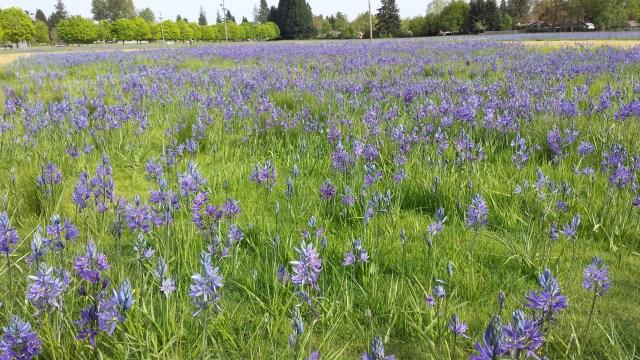 Camas Field , Salem
